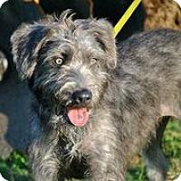 Adopt A Pet :: Babs - Austin, TX