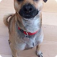 Adopt A Pet :: Jack - Newbury Park, CA