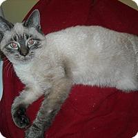 Adopt A Pet :: Austin - Arlington, VA