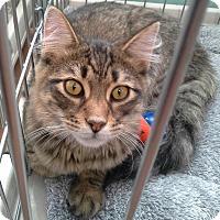 Adopt A Pet :: Apple - Raritan, NJ