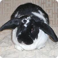 Adopt A Pet :: Mandi - Woburn, MA