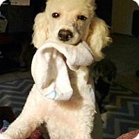 Adopt A Pet :: CHARLOTTE - Melbourne, FL