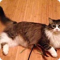 Adopt A Pet :: Lucy - Davis, CA