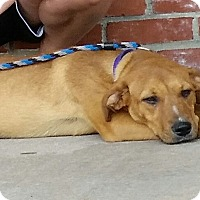 Adopt A Pet :: Windy Rose in CT - Manchester, CT