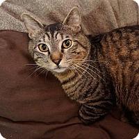 Adopt A Pet :: Awesome - Alameda, CA