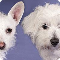 Adopt A Pet :: Wanda & Manny - Chicago, IL