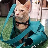 Adopt A Pet :: BIG WAL Walton - Highland Park, NJ