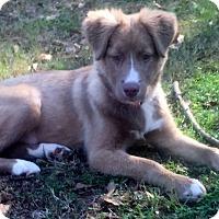 Adopt A Pet :: Dolce - Smyrna, GA