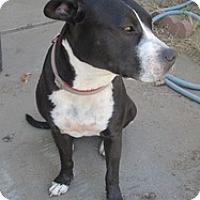 Adopt A Pet :: Pepper - Sacramento, CA