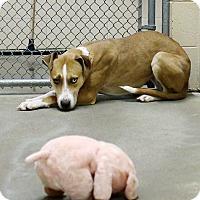 Adopt A Pet :: Grace *Foster * - Appleton, WI