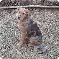 Adopt A Pet :: Bonnie Clouse - Staunton, VA