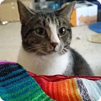 Adopt A Pet :: Sadie - Cary, NC