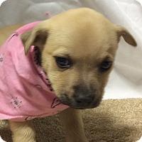 Adopt A Pet :: Suzanne - Buffalo, NY