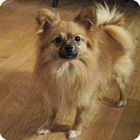 Adopt A Pet :: Mylo - Toronto, ON