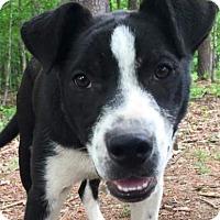 Adopt A Pet :: Jep - Harrisonburg, VA