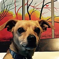 Adopt A Pet :: Scooby - Miami, FL