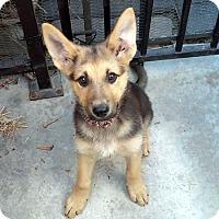 Adopt A Pet :: Jillian - Downey, CA