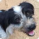 Adopt A Pet :: Skeeter