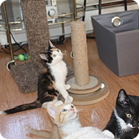 Adopt A Pet :: Vespa - St. Louis, MO