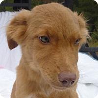 Adopt A Pet :: Billie Jo Petticoat *MEET ME!* - Wakefield, RI