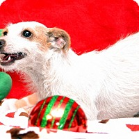 Adopt A Pet :: Crackles - Okeechobee, FL