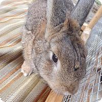Adopt A Pet :: Beth - Palm Coast, FL