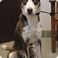 Adopt A Pet :: Fletcher - Billings, MT