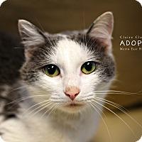 Adopt A Pet :: Lola - Edwardsville, IL