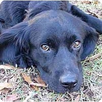 Adopt A Pet :: Wesley - Mocksville, NC