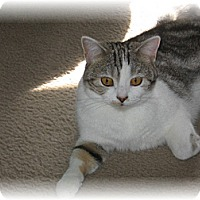 Adopt A Pet :: Bethie - Loveland, CO