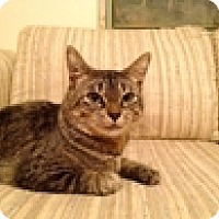 Adopt A Pet :: Willow - Vancouver, BC