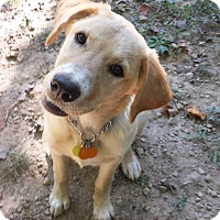 Adopt A Pet :: Gomer - Staunton, VA