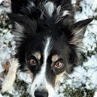 Adopt A Pet :: Riane - Bellevue, NE