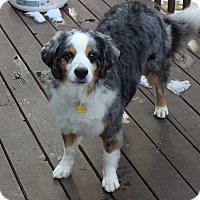 Adopt A Pet :: Una - Elk River, MN