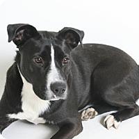 Adopt A Pet :: Kenzi - Redding, CA