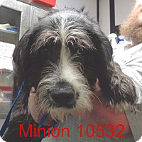 Adopt A Pet :: Minnion - baltimore, MD