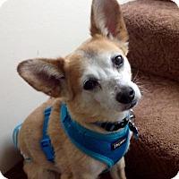 Adopt A Pet :: Dorian - Marina del Rey, CA