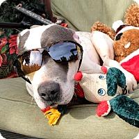 Adopt A Pet :: Donald - Toluca Lake, CA