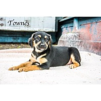 Adopt A Pet :: Townes - West Hartford, CT