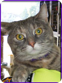 Domestic Mediumhair Cat for adoption in Milwaukee, Wisconsin - Nina