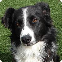 Adopt A Pet :: DUEY - Hurricane, UT