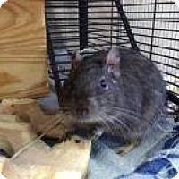 Adopt A Pet :: Mahalia & Mercy - Quilcene, WA