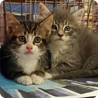 Adopt A Pet :: GRETA & GARBO - Whitestone, NY