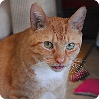Adopt A Pet :: Sampson - Winchendon, MA