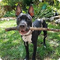 Adopt A Pet :: Beatrix Belden- Adoption Pending - Minneapolis, MN