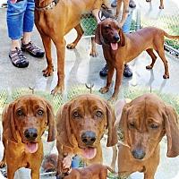 Adopt A Pet :: Dozier - Hot Springs, VA