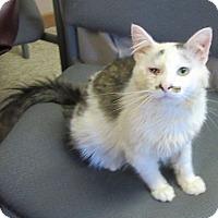 Adopt A Pet :: Francis - Glenwood, MN