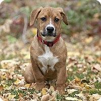 Adopt A Pet :: Daisy - Jackson, ID