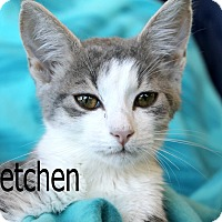 Adopt A Pet :: Gretchen - Wichita Falls, TX