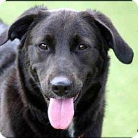 Adopt A Pet :: OREO - Carlsbad, CA